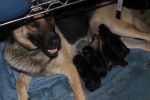 Suni and Puppies